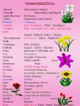 Meanings Behind Flowers PowerPoint PPT Presentation