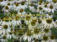 Let 1000 Flowers Bloom: Support for the current system PowerPoint PPT Presentation