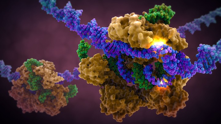 CRISPR-Cas9-in-Complex-with-Guide-RNA-and-target-DNA