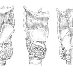 Larynx Thyroid