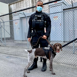 Pace the GSP on set as a bomb sniffing dog