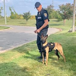 Jolt the Malinois on set as a Police dog