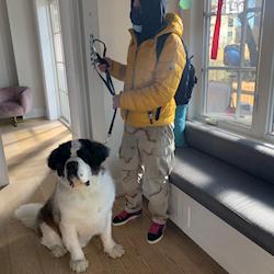 Hawk the Saint Bernard waiting with his dad behind the scenes