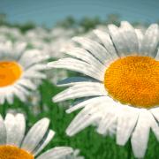 Blender Render | Flower