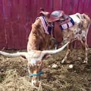 Pixie under saddle