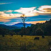 Evening at the 12Spies Vineyard in Rabun County, Ga August 2018