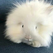 Fluffinator the bunny