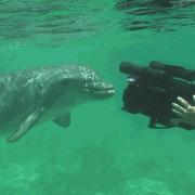 John records a friendly dolphin