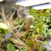 Green house to maintain live propping plants