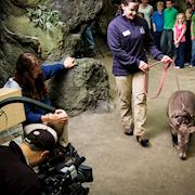 A is for AARDVARK at Point Defiance Zoo and Aquarium