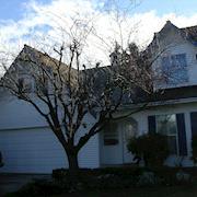 Before - Winter Tree