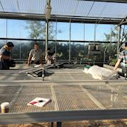 Shooting in a greenhouse.