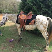 Espy-Small horse/large pony, Appaloosa mare