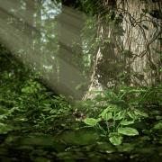 Blender Render | Plants