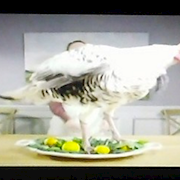Our turkey on Stephen Colbert