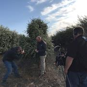 Olive Growers