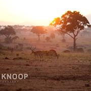 Maasai Mara Kenya, Africa