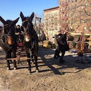 Our mules on set