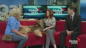 Bonnie Judd Animal trainer for film / Animal Wrangler / Global news interview.