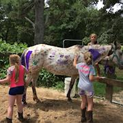 Espy, big pony/small horse, Appaloosa, mare