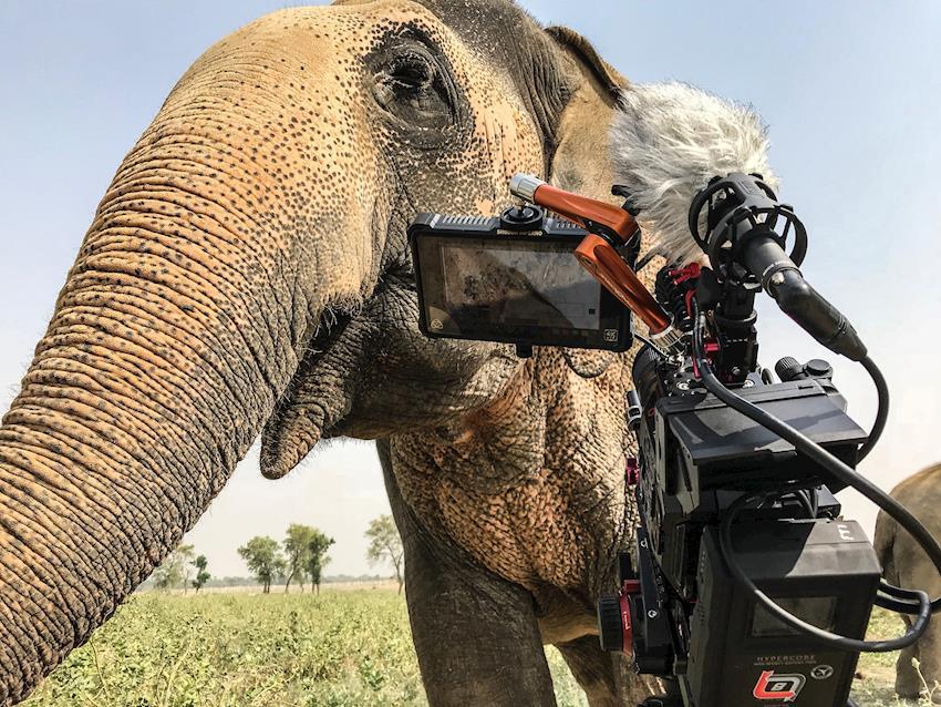 DP Joe Callahan Shoots Wildlife Documentary in India with AU-EVA1 5.7K Cinema Camcorders