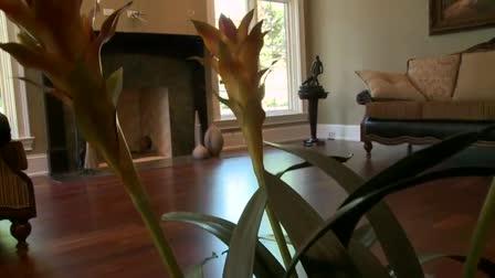 Realestate Property HD Video