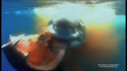 ABC4 WILDLIFE CINEMATOGRAPHY PORTFOLIO 2011