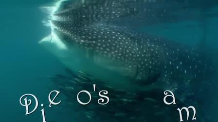 Diego's Dream - Shot by DP Underwater Cameraman Jim Knowlton