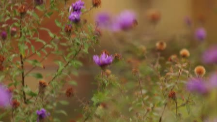 Somerville Community Path Autumn Film Ditty