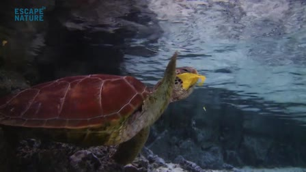 Underwater Showreel