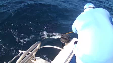 Catching a King Fish at Saltwater Fishing Tournament 2016