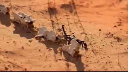 Scorpion - Ted Cruz For President