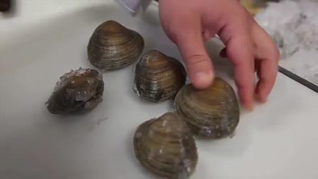 Newport Restaurant Group RI Shellfishing