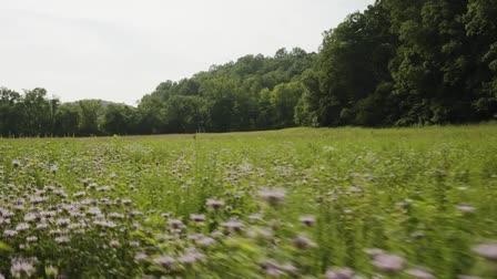 Wildflower Woods