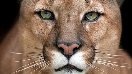72 Dangerous Animals Latin America (NETFLIX ORIGINAL)
