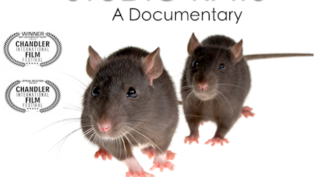 Studio Rats - A Documentary