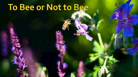 To Bee or Not to Bee - Trailer