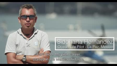 The Passion of Flight - Sidd Hernandez