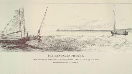 Foraging the High Seas: a Menhaden Story