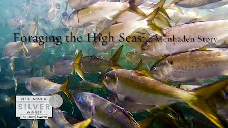 Foraging the High Seas: a Menhaden Story