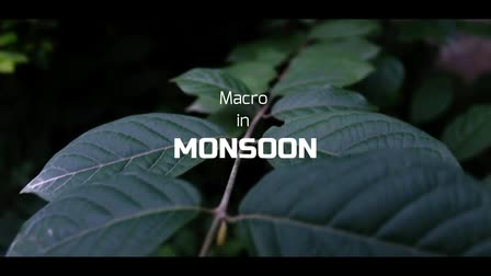 Macro in Monsoon (Preview)