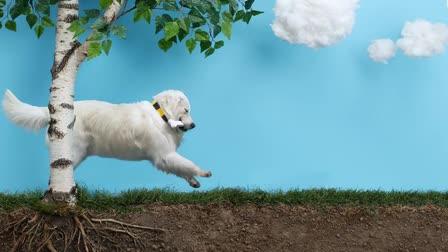 BEELINE - TRICKY DOG