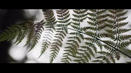 Noble Oak - In Series