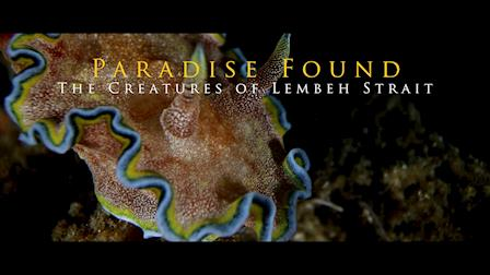 Paradise Found: Creatures of Lembeh Strait