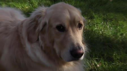 A Dog Named Gus