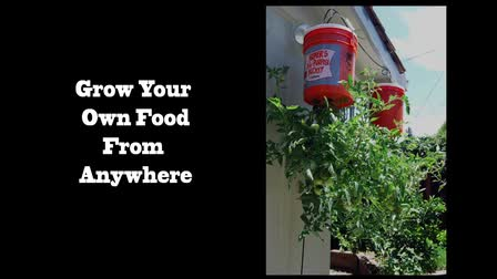 How to Grow A Container Garden