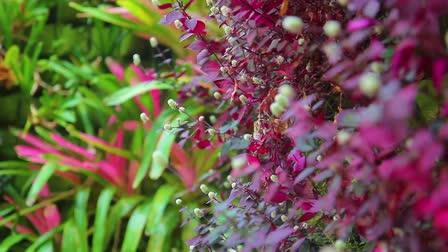 Akatsuka Orchid Gardens