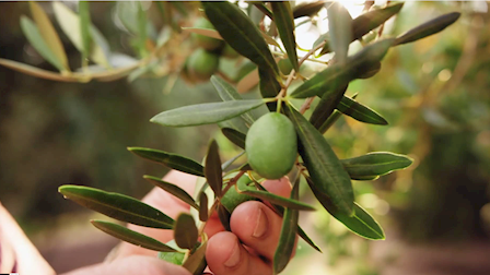 California Ripe Olive Committee: Deep Roots, Bright Future