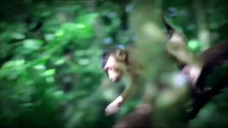 Otobi Jungle