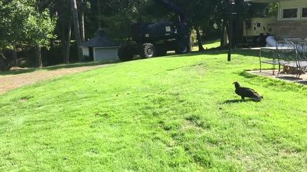 Vulture Flight Prepwork
